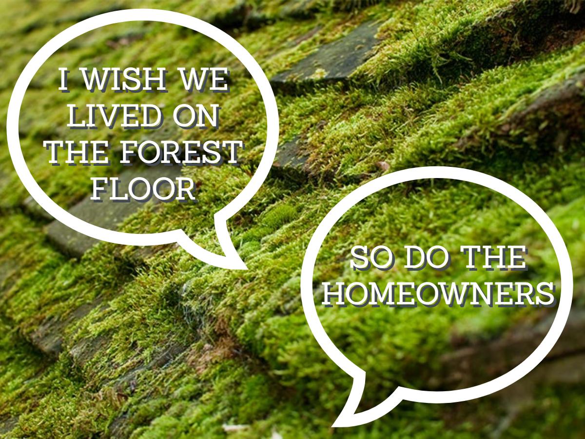moss on roof tiles.Latitude 51.3667, Longitude-0.4667