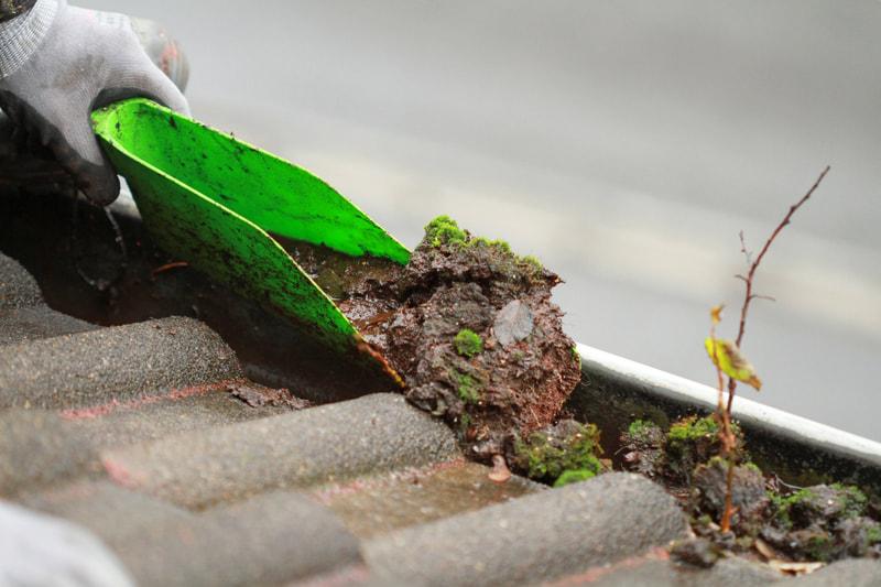 Removing-moss-from-guttering.-Latitude-51.3667-Longitude-0.4667